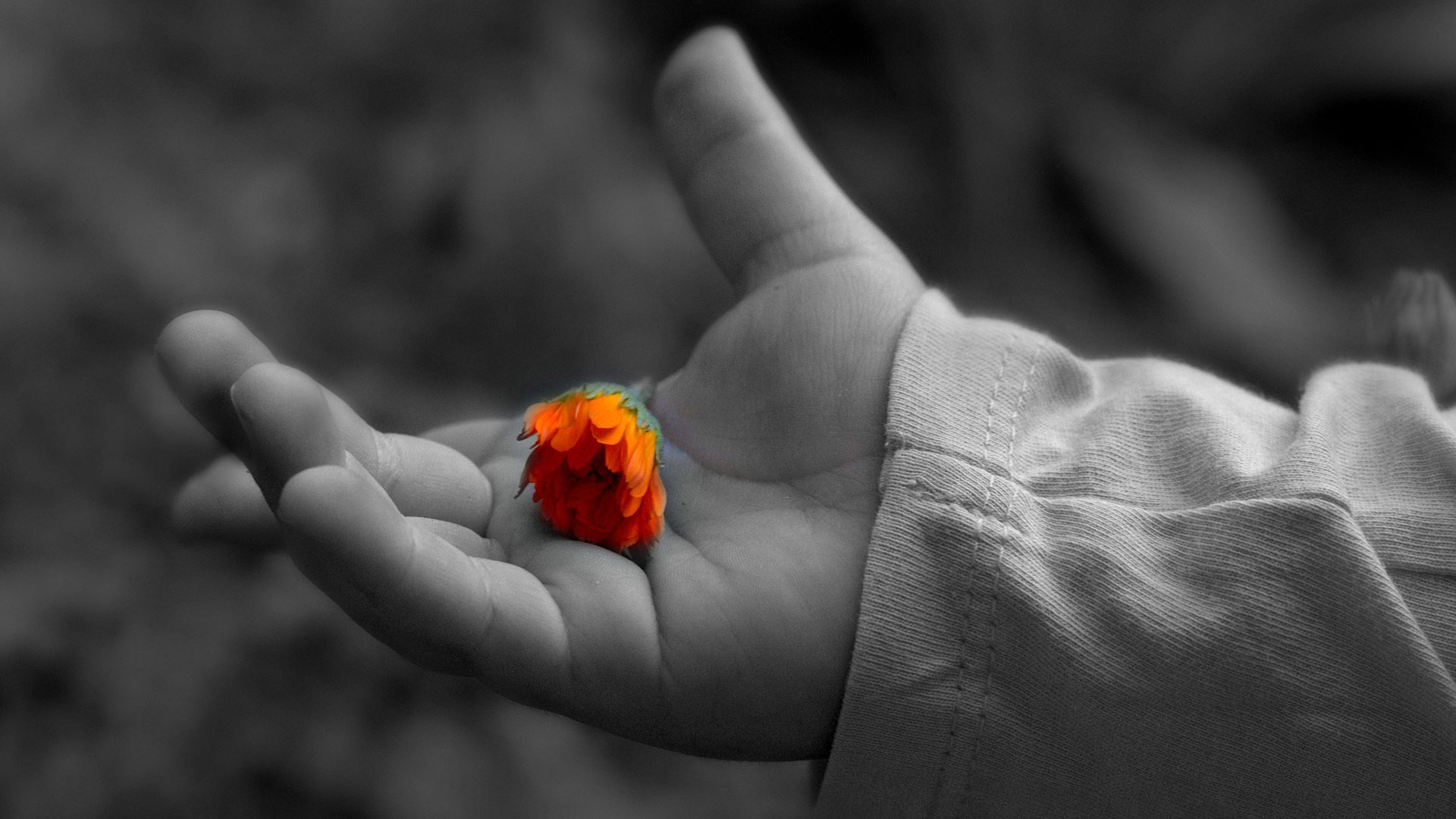 Black and white hand holding a colored flower.